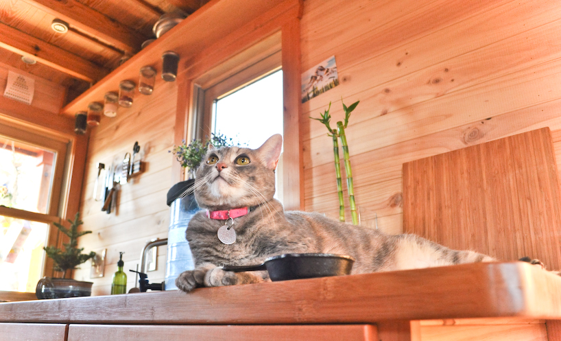 Row51 1 - Tammy is living in a 12 m2 (128 ft2) tiny house with her husband and two cats