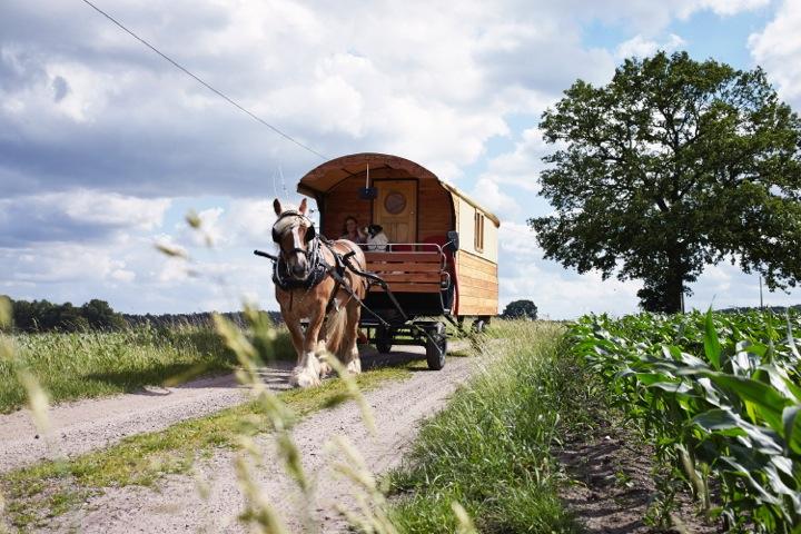 140613 HeideCaravan 0734 - Travel the German moorland in a horse drawn caravan