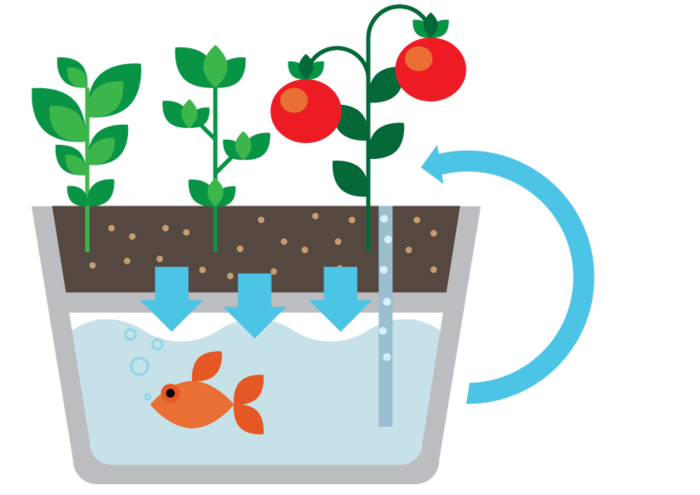 eco 4 - This self-cleaning fish tank also waters your herbs automatically