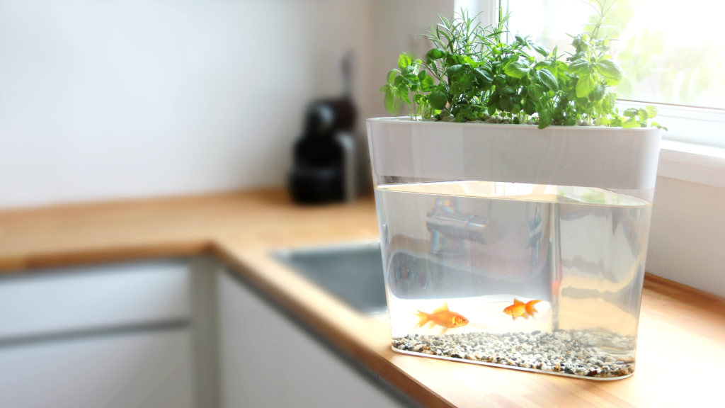 eco farm 3 - This self-cleaning fish tank also waters your herbs automatically