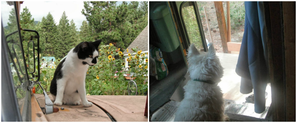 dogandcat - Katherine lives happily in a converted school bus with her husband, an 8-month-old baby, a dog and a cat