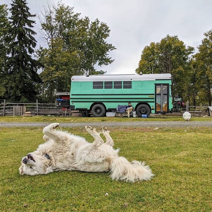 school bus conversion olly 2 - This school bus conversion is farmhouse style goals