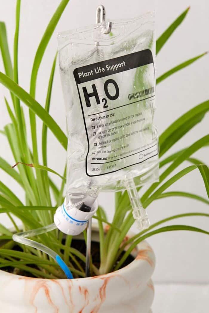 60014388 010 b - Plant killer rehabilitation: 24 self-watering ideas