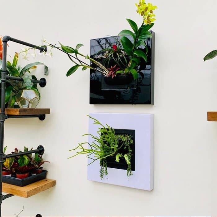 NoellaSelf WateringPlasticWallPlanter - Plant killer rehabilitation: 24 self-watering ideas
