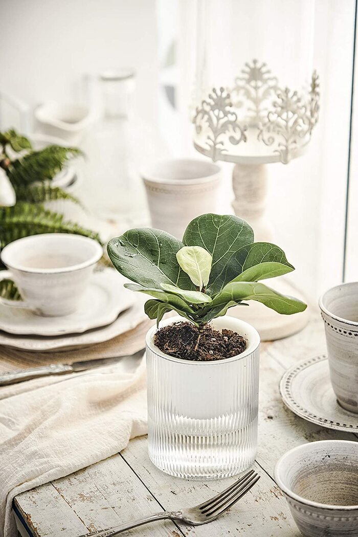 self watering plant ideas 4 1 - Plant killer rehabilitation: 24 self-watering ideas