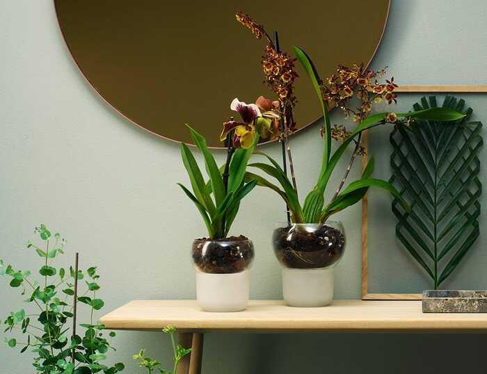 self watering plant ideas 7 1 - Plant killer rehabilitation: 24 self-watering ideas