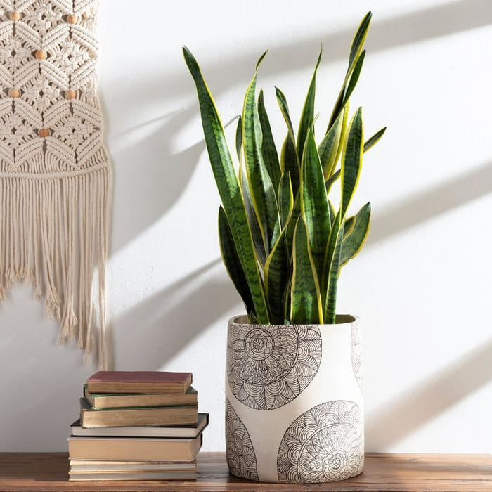 Gene Terracotta Mandala Indoor Planter - Give your favorite plant a fabulous makeover with one of these 25 planters