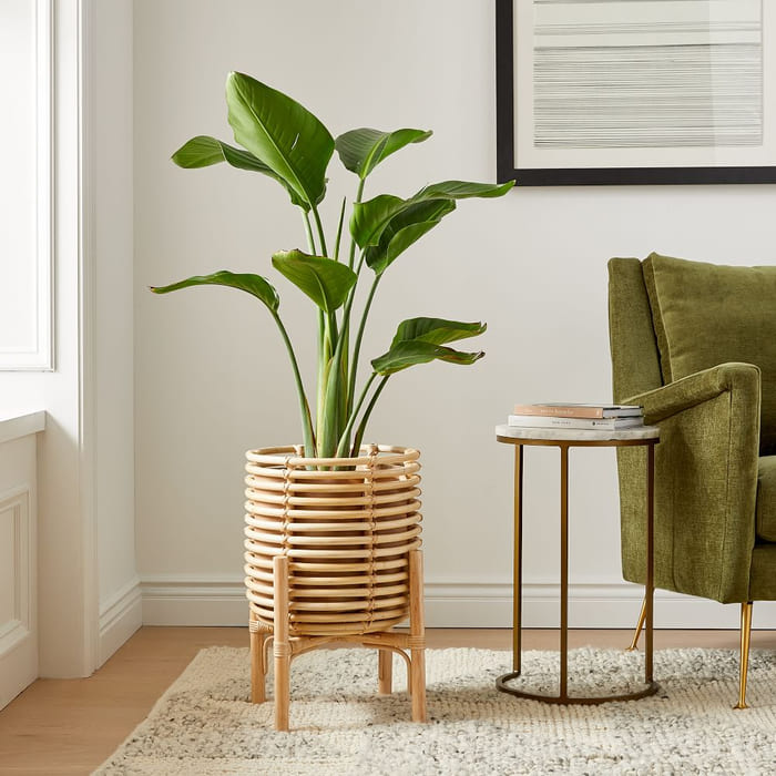 live medium white bird of paradise plant z - Give your favorite plant a fabulous makeover with one of these 25 planters