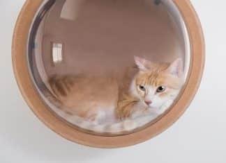 cat pod 324x235 - 27 unique pendants to light up your home